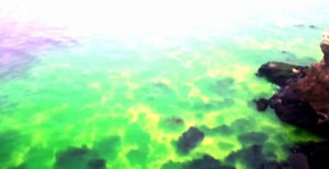 Russian sea turns bright green