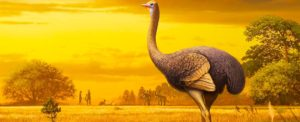 ancient eleven foot tall bird discovered