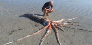 giant squid washes ashore in South Africa
