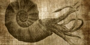 could there be fossil evidence of the legendary kraken