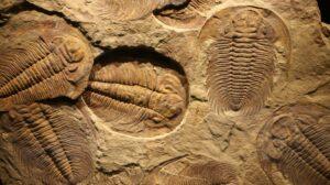 why did trilobites go extinct