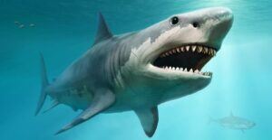 ancient teeth of the megalodon shark may reveal why they went extinct