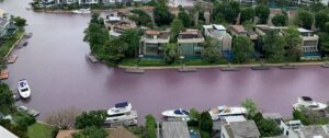 water mysteriously turns pink in Singapore canal