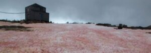 snow turns blood red in Antarctica