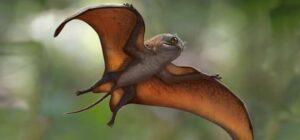 new species of pterosaur discovered