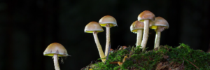 study suggests mushrooms may reduce risk of cancer