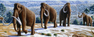 US company proposes to repopulate Siberia with woolly mammoths